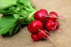 Gemüse aus dem Garten: Radieschen pflanzen - Tip