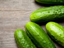 Gurken im Gewächshaus anpflanzen: alles Wissenswerte - Tip