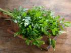 Aromatische Petersilie selbst pflanzen - Tip