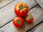 Tomaten einlegen – darauf ist zu achten - Tip