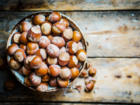 Herbstzeit ist Haselnusszeit: Haselnüsse ernten - Tip