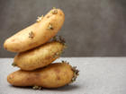 Kartoffeln schälen – schnell und mühelos - Tip