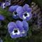 Benutzerbild von lunapiena