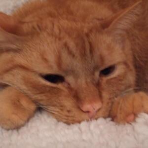 Katzensternekoch