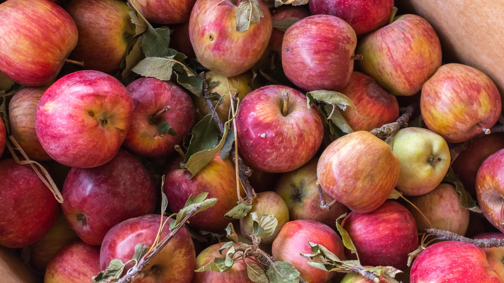 Äpfel mit kleinen Makeln schmecken trotzdem gut.