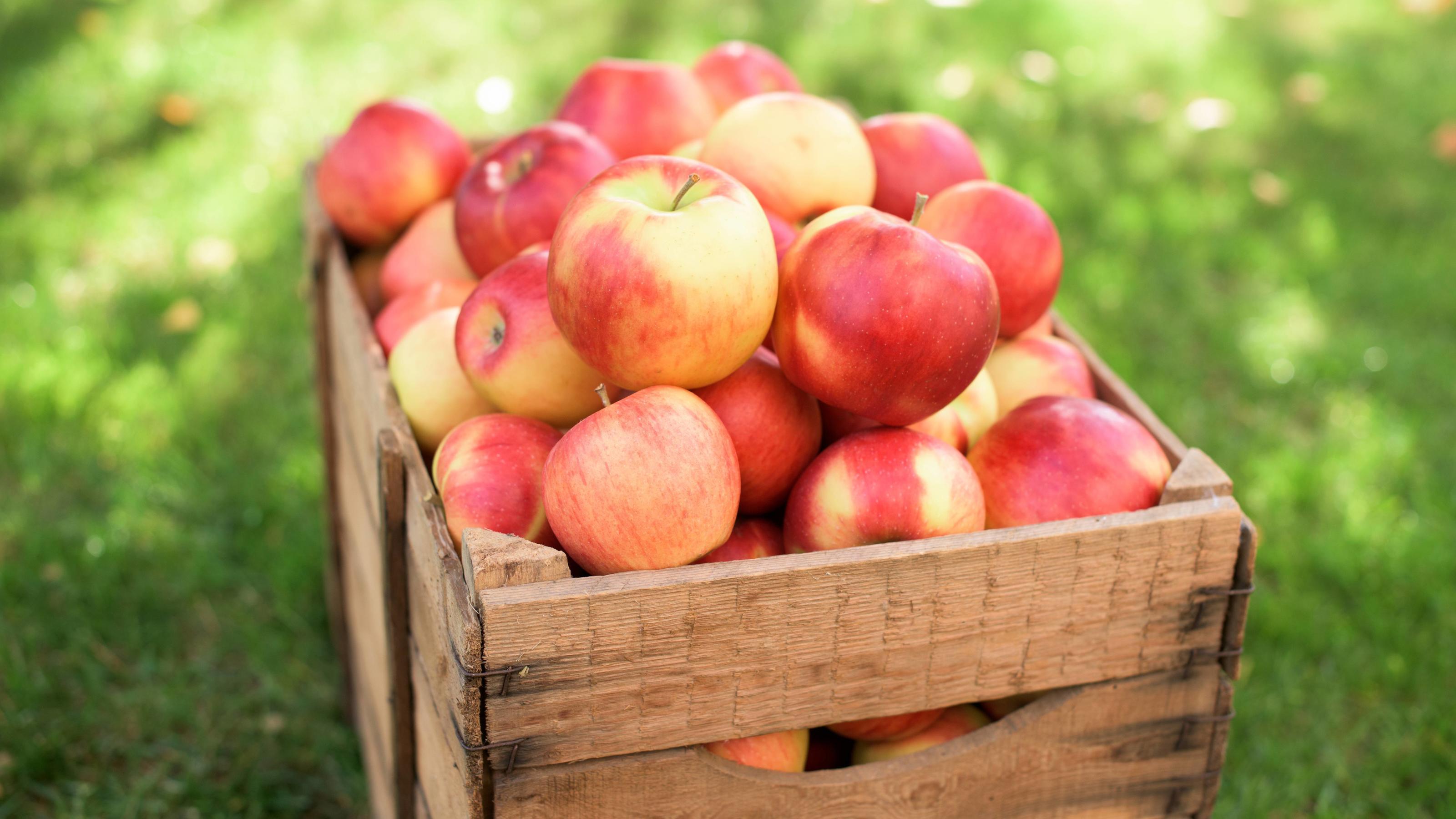 rote Äpfel *** red apples PUBLICATIONxINxGERxSUIxAUTxONLY photocase2210421