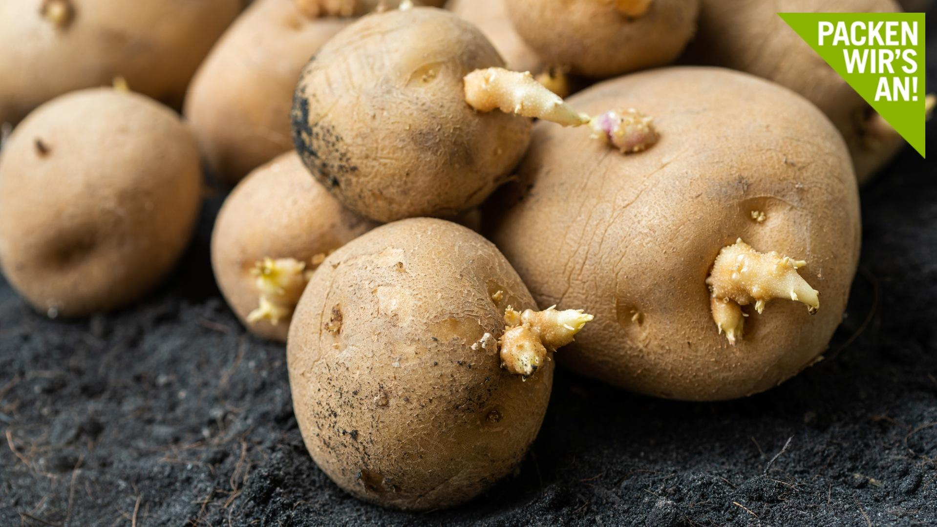 Kann man keimende Kartoffeln noch essen?