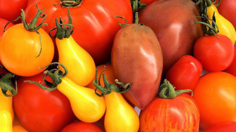 tomaten gesund wirkstoff kann schlaganfall vorbeugen. Black Bedroom Furniture Sets. Home Design Ideas