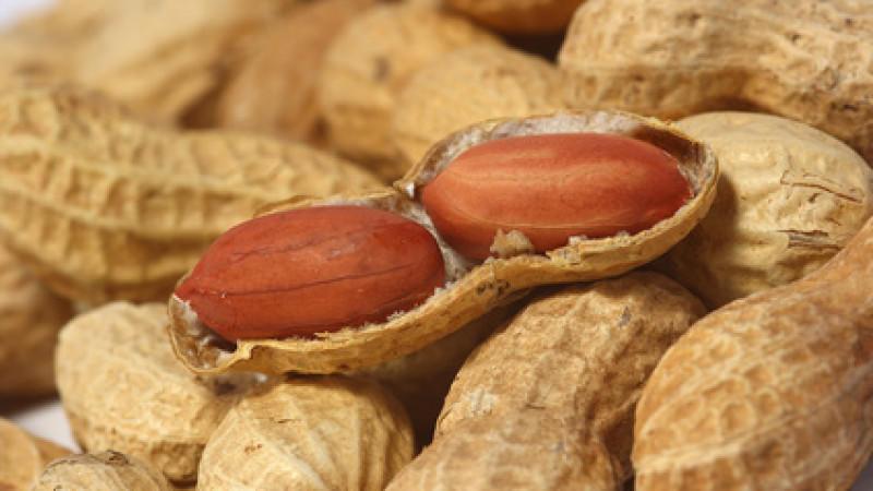 Erdnussallergie: Erdnusskonsum schon im Kleinkindalter beugt Allergie vor