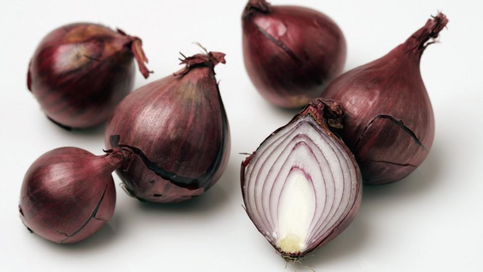 Die Zwiebel – eine vielschichtige Knolle!