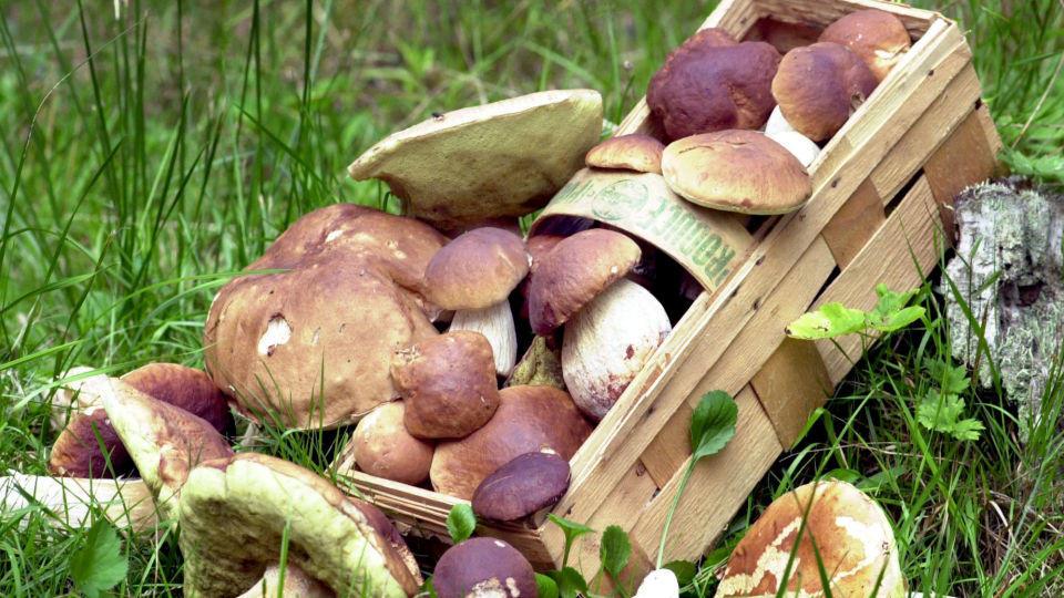 Pilze: So werden sie richtig behandelt und gelagert