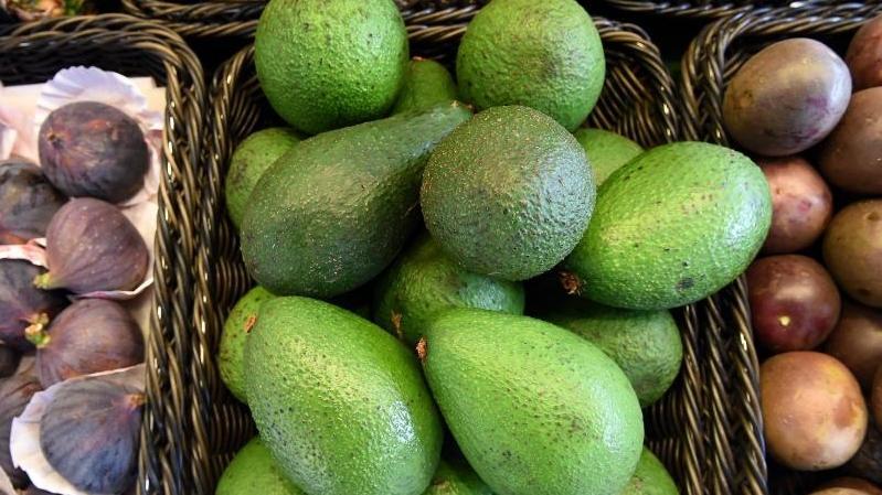 Die Avocadosorte 'Fuerte' hat eine glatte grüne Schale.