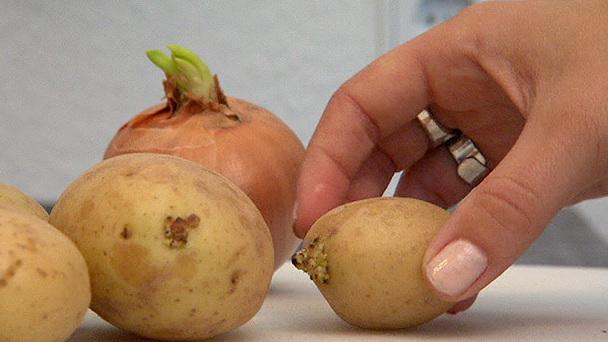 Treibende Kartoffeln Essen