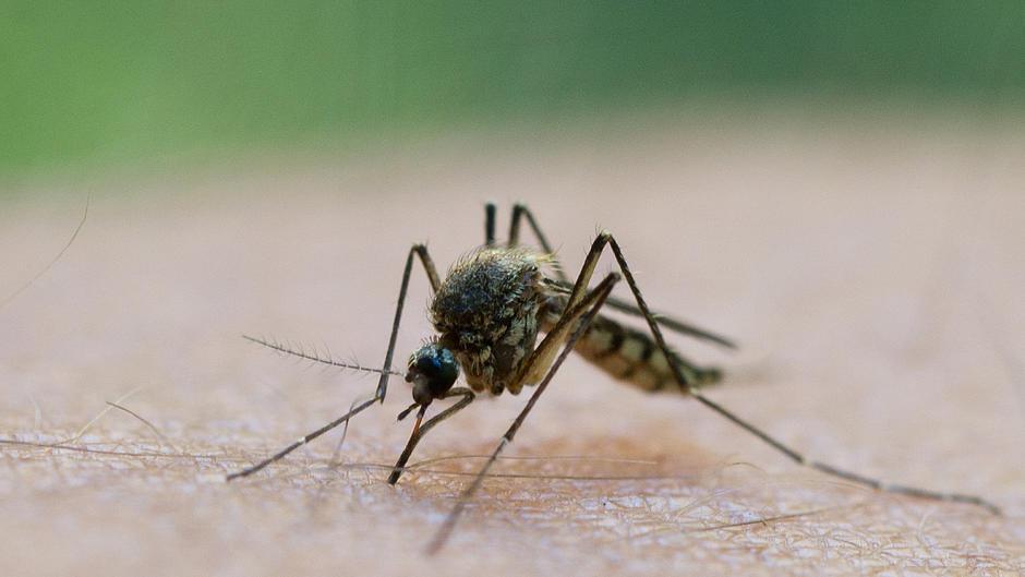 Daran erkennst du, welches Insekt dich gestochen hat