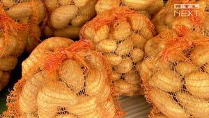 Kartoffeln können schwere Probleme verursachen