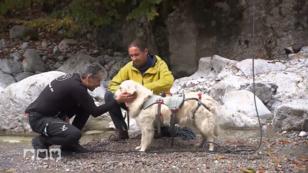Sicheres Bergwandern mit Hund