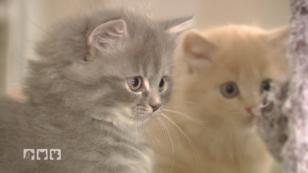 Katzenbabys - das passiert in den ersten Wochen