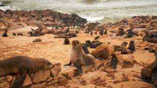 Diese Familie bewahrt Robben davor zu ersticken